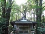 0509 春埜山の大杉 007.jpg